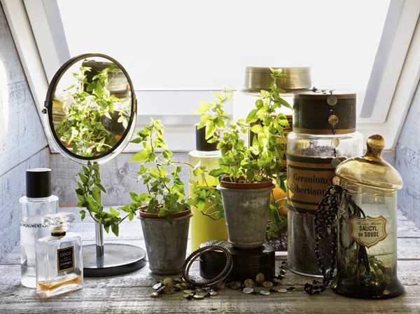 комнатные растения в горшочках