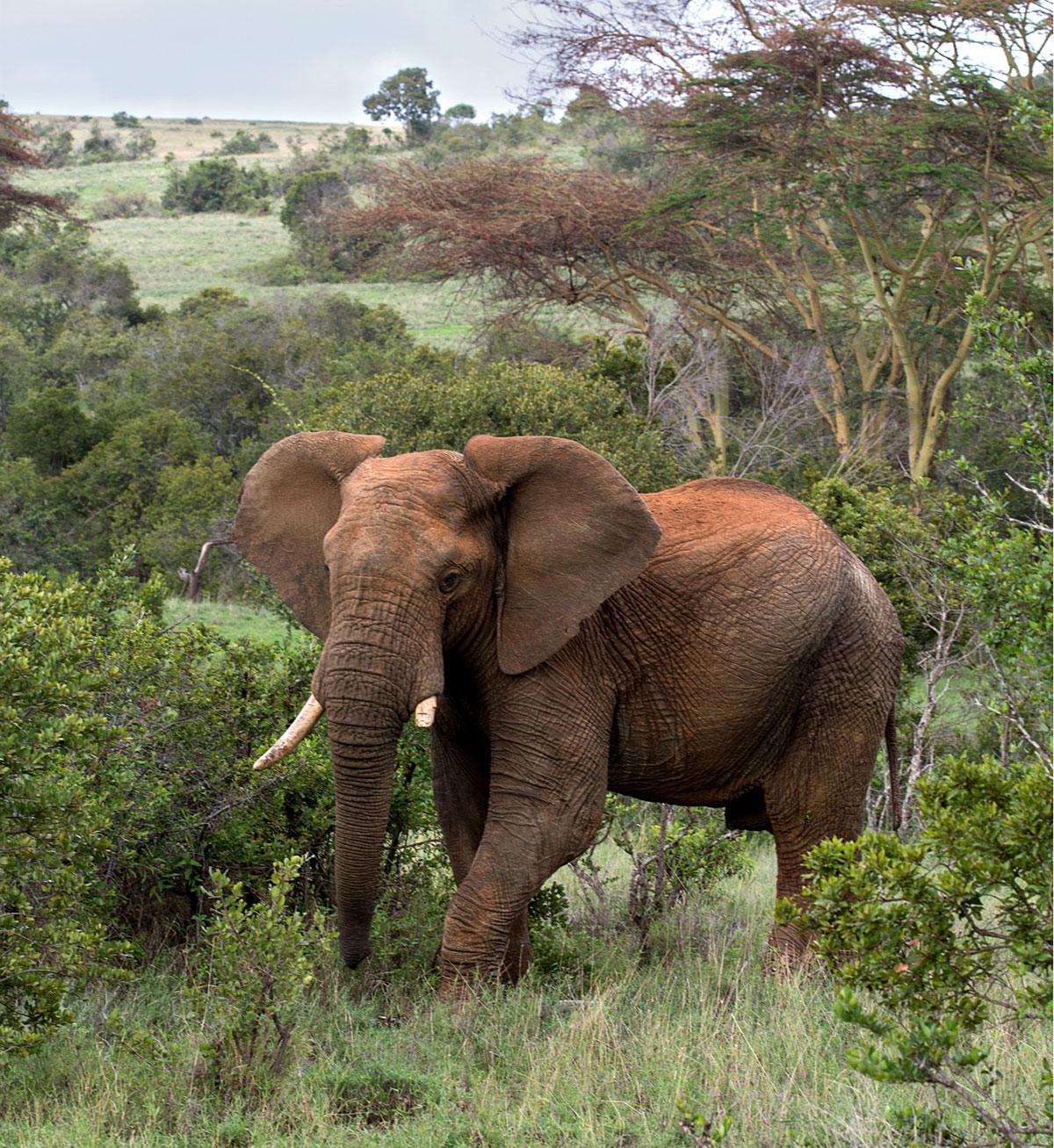 Лодж в Кении, из окон которого можно наблюдать за дикими животными